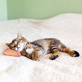 160626325sleeping cat