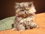 kitten-beauty-1007498