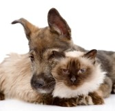 20959765-dog-embraces-a-cat--isolated-on-white-background