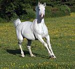 horse-1001720