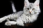 pussy-cat-10022760