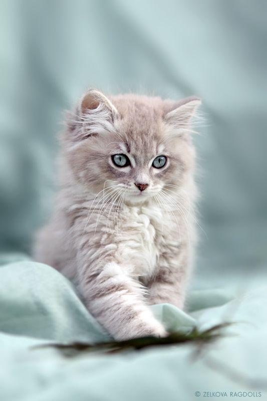 1grey kitty