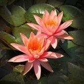 179997151 orange flower