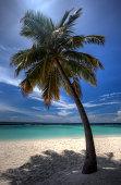 180005382 palm tree