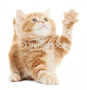 166162013hi five kitty