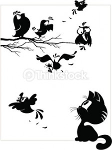 166539759oops birds