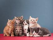 83454804 kittens