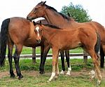 horses-with-foal-10045571