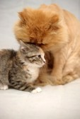 15399867-cat-and-kitten