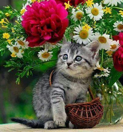 kitten flowers