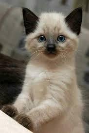 3 kitty